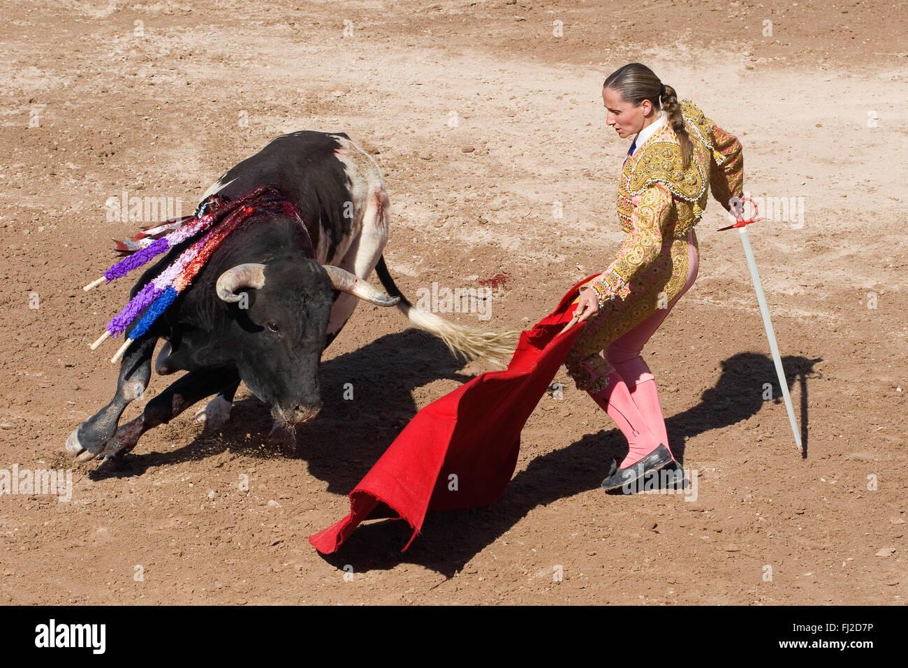 83874234e0d The female matador RAQUEL SANCHEZ fights a bull in the Plaza de Toros - SAN  MIGUEL
