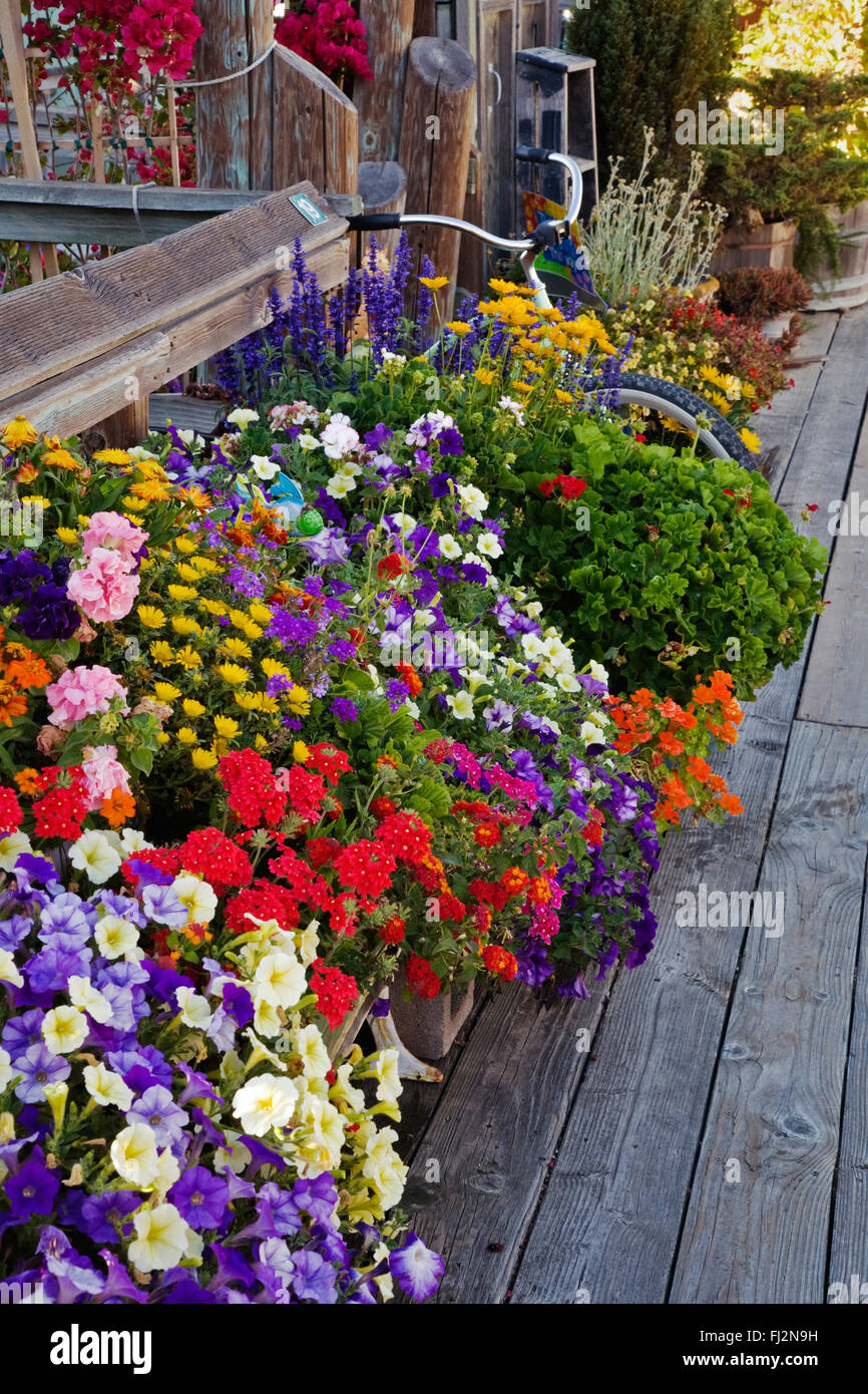 FLOWER POTS line the wooden walkway to  HOUSE BOATS in SAUSALITO - SAN FRANCISCO BAY, CALIFORNIA Stock Photo