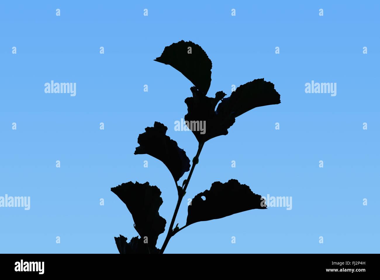 PLANT SILHOUETTE - Stock Image