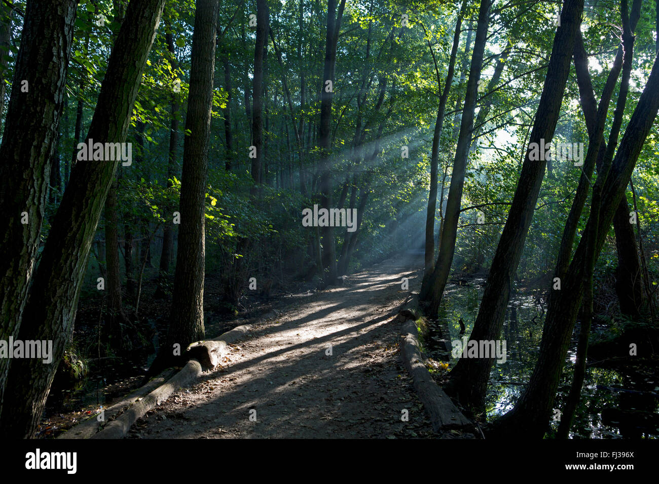 Grunewald forest, Berlin, Germany - Stock Image
