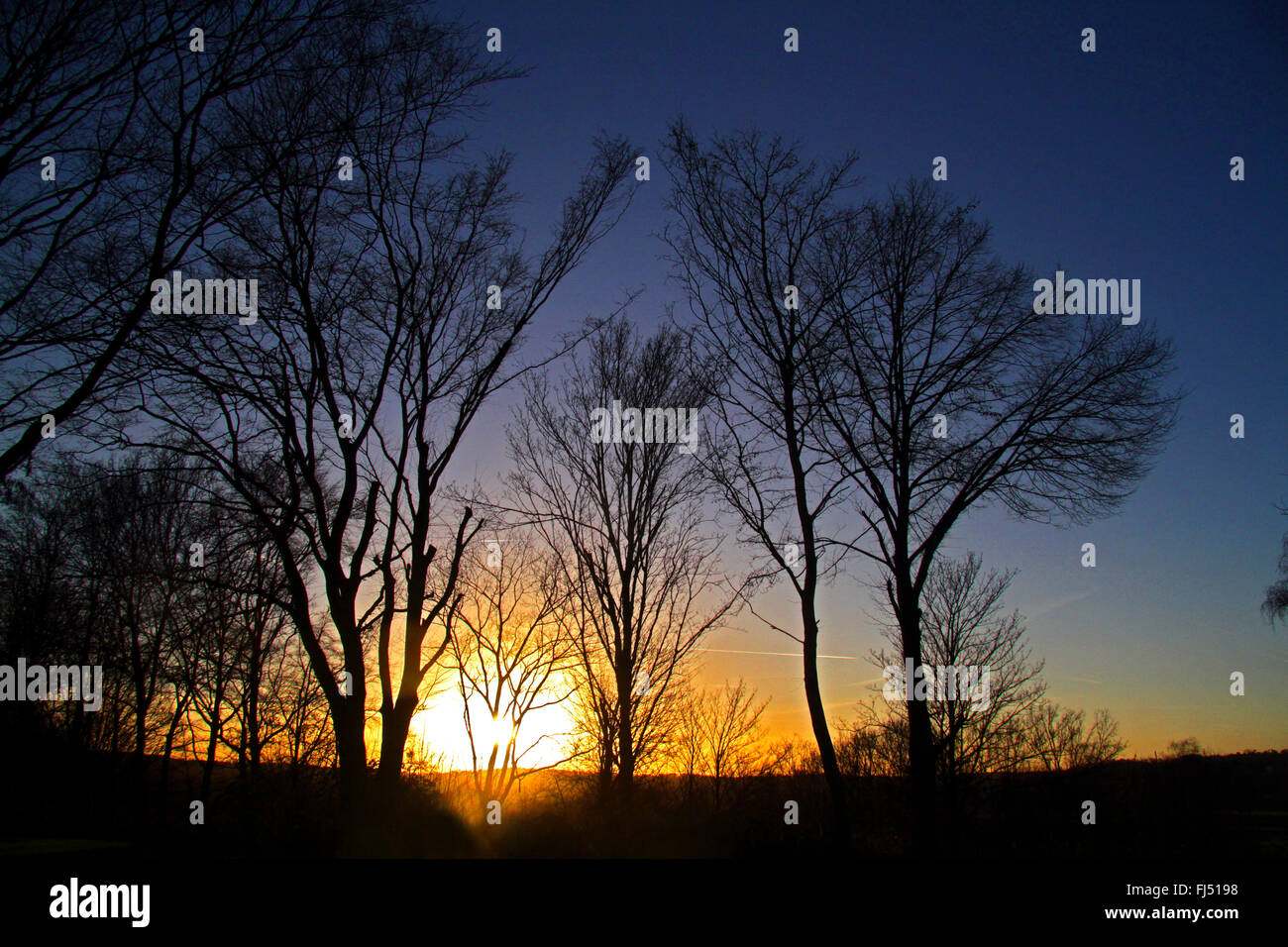 silhouettes of trees in sunset, Germany - Stock Image