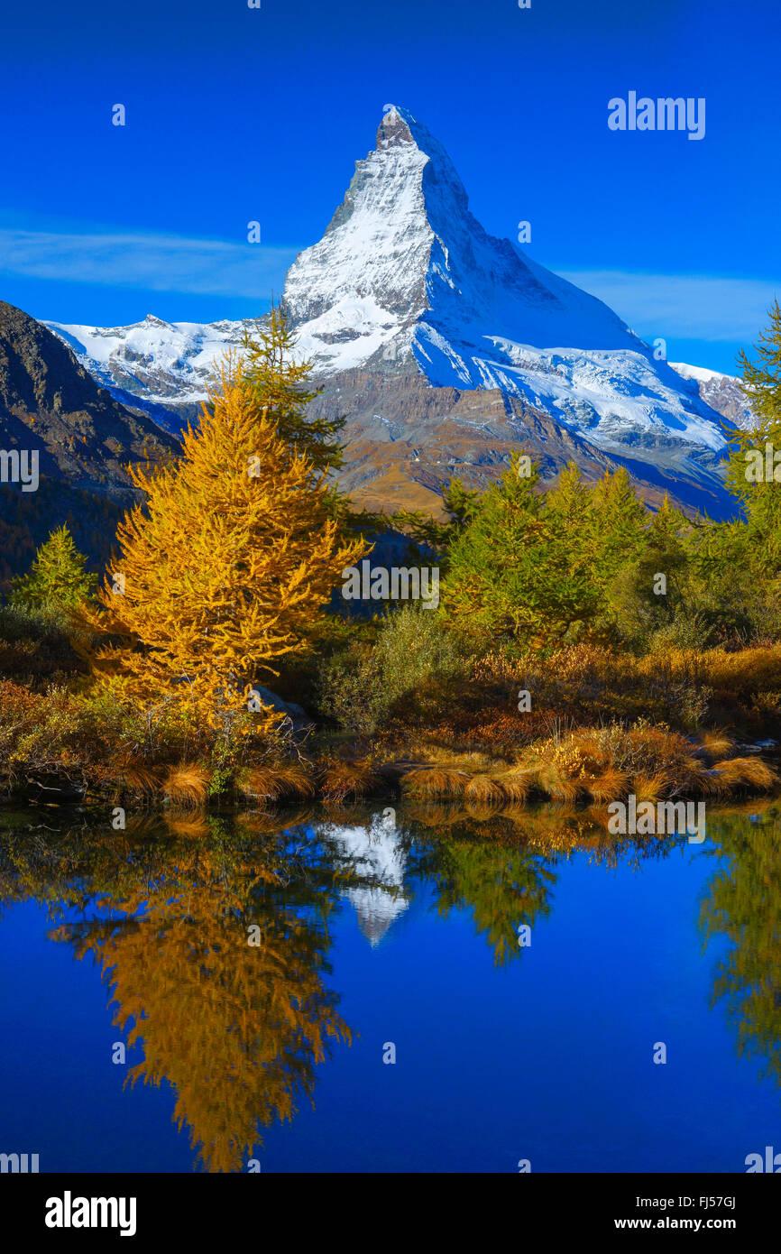 Matterhorn and larches mirroring on Lake Grindji, Switzerland, Valais - Stock Image