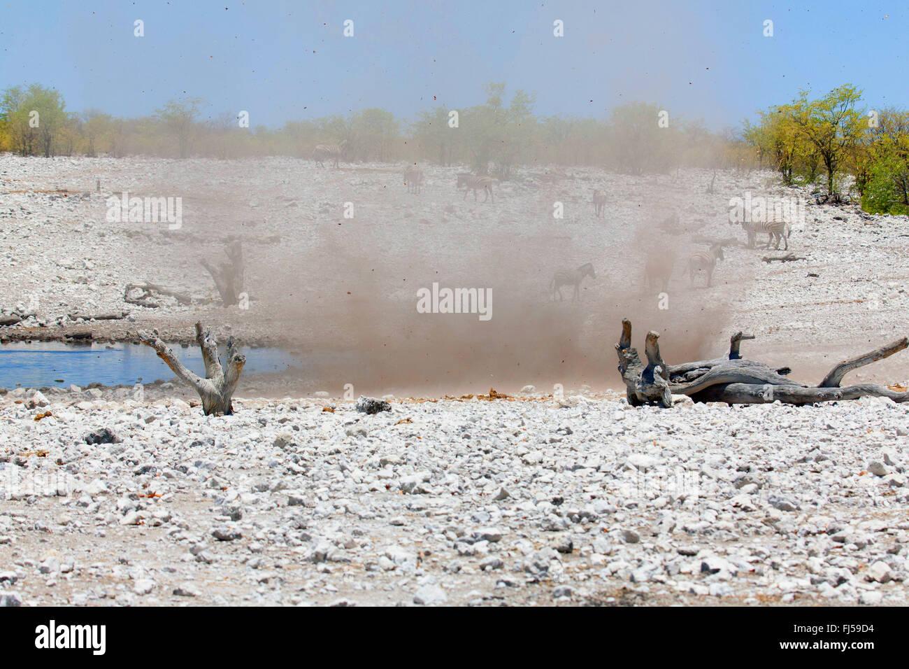 dust devil whirling up sand and stones near a waterhole with zebras, Namibia, Etosha National Park, Naumutoni Stock Photo