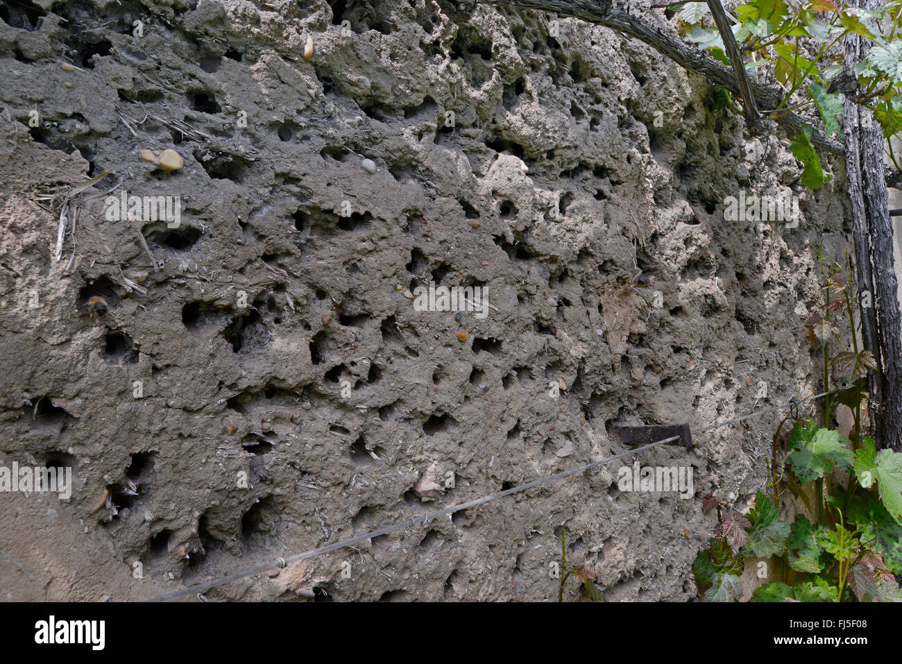 entrances of wild bees in the wall of an old farm house, Germany, Saxony-Anhalt, Osternienburger Land - Stock Image