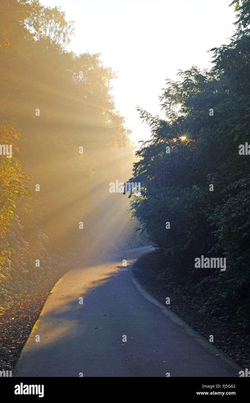 cycle way on disused railway Rheinischer Esel in the morning sun, Germany, North Rhine-Westphalia, Ruhr Area, Bochum - Stock Image