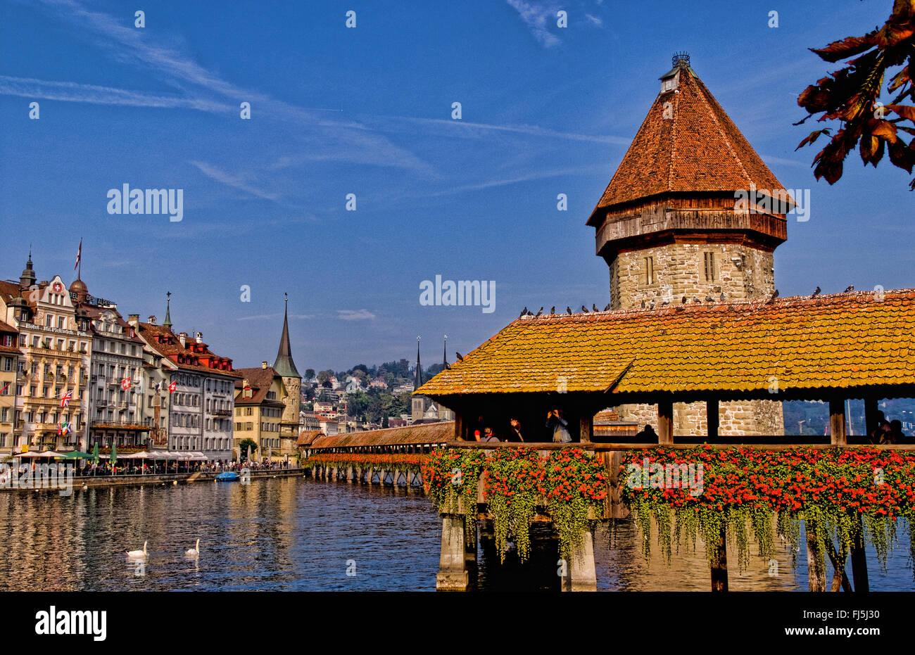 Kapelbrucke Bridge called Chapel Bridge with swans at lake in Lucerne, Switzerland, Lucerne - Stock Image