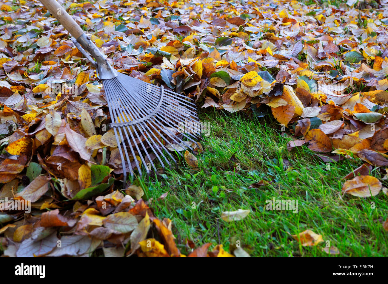 leaf rake for sweeping the foliage, Germany, North Rhine-Westphalia, Ruhr Area, Castrop-Rauxel - Stock Image