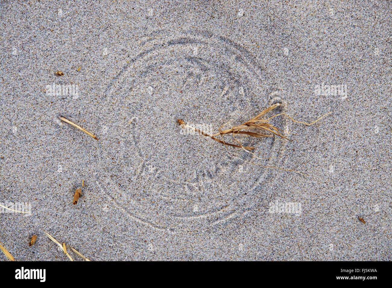 plant remains rotating by the wind and left remarks in the sand, Denmark, Thy National Park - Stock Image