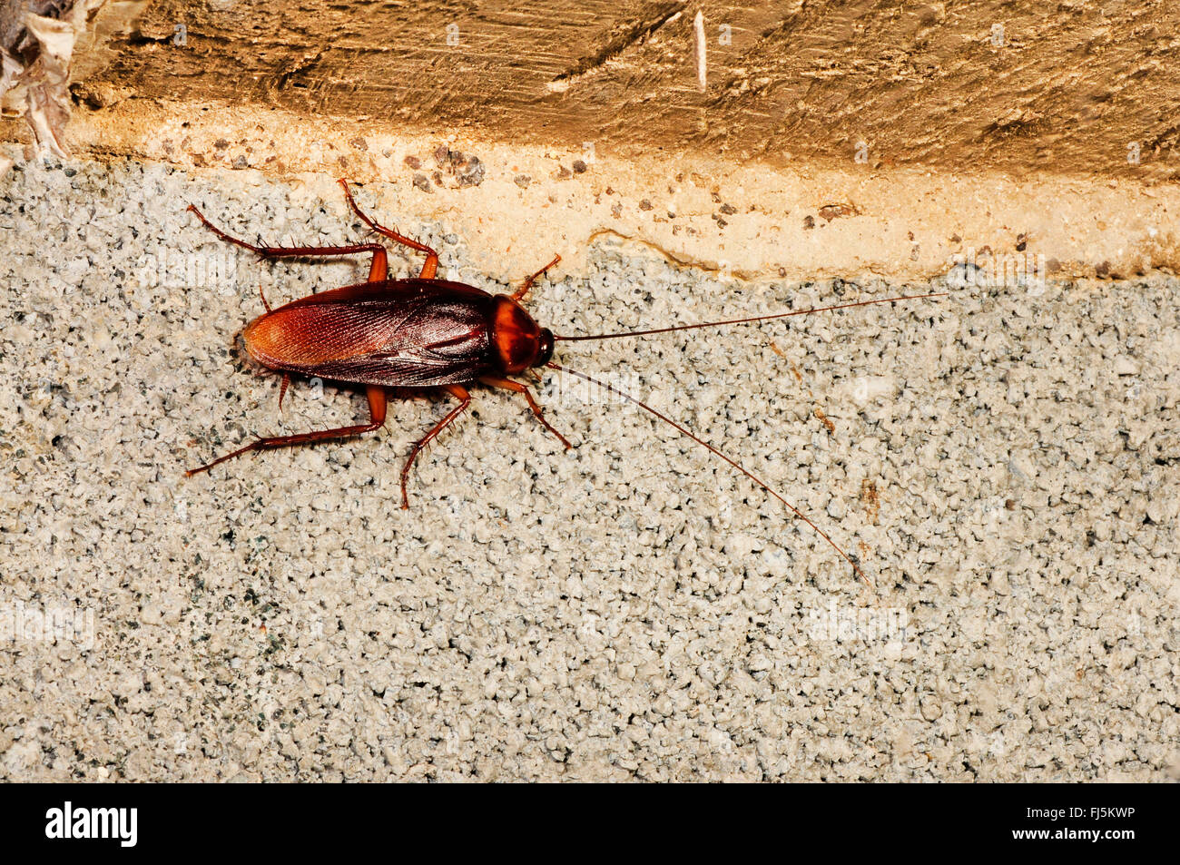 Cockroaches House Stock Photos & Cockroaches House Stock Images - Alamy