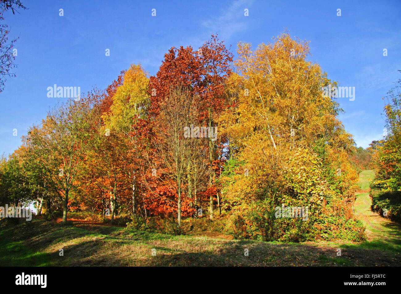 nature reserve Mechtenberg in Essen-Kray in autumn, Germany, North Rhine-Westphalia, Ruhr Area, Essen - Stock Image