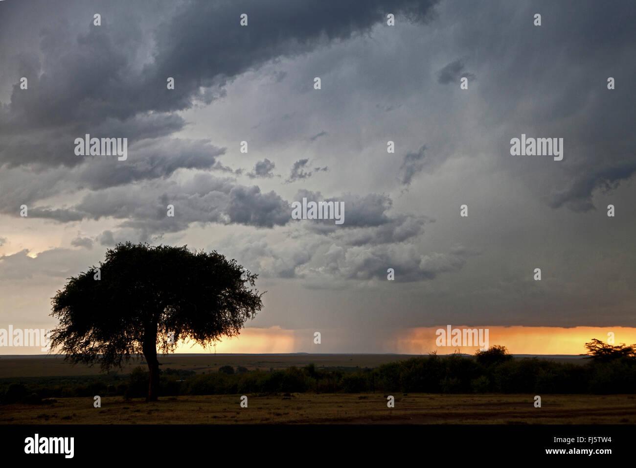 intense rainfall at Massai Mara, Kenya, Masai Mara National Park - Stock Image