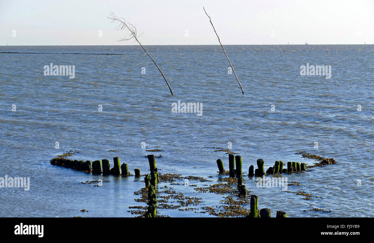 old bank reinforcement at the port entrance of Spieka Neufeld, Germany, Lower Saxony, Spieka Neufeld - Stock Image