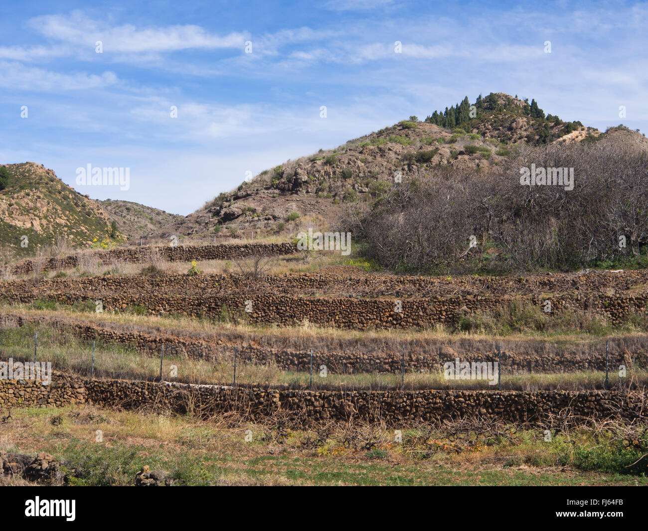 Terraced field for wine growing in Valle de Arriba, Tenerife Canary islands Spain, lava stone walls , winter - Stock Image