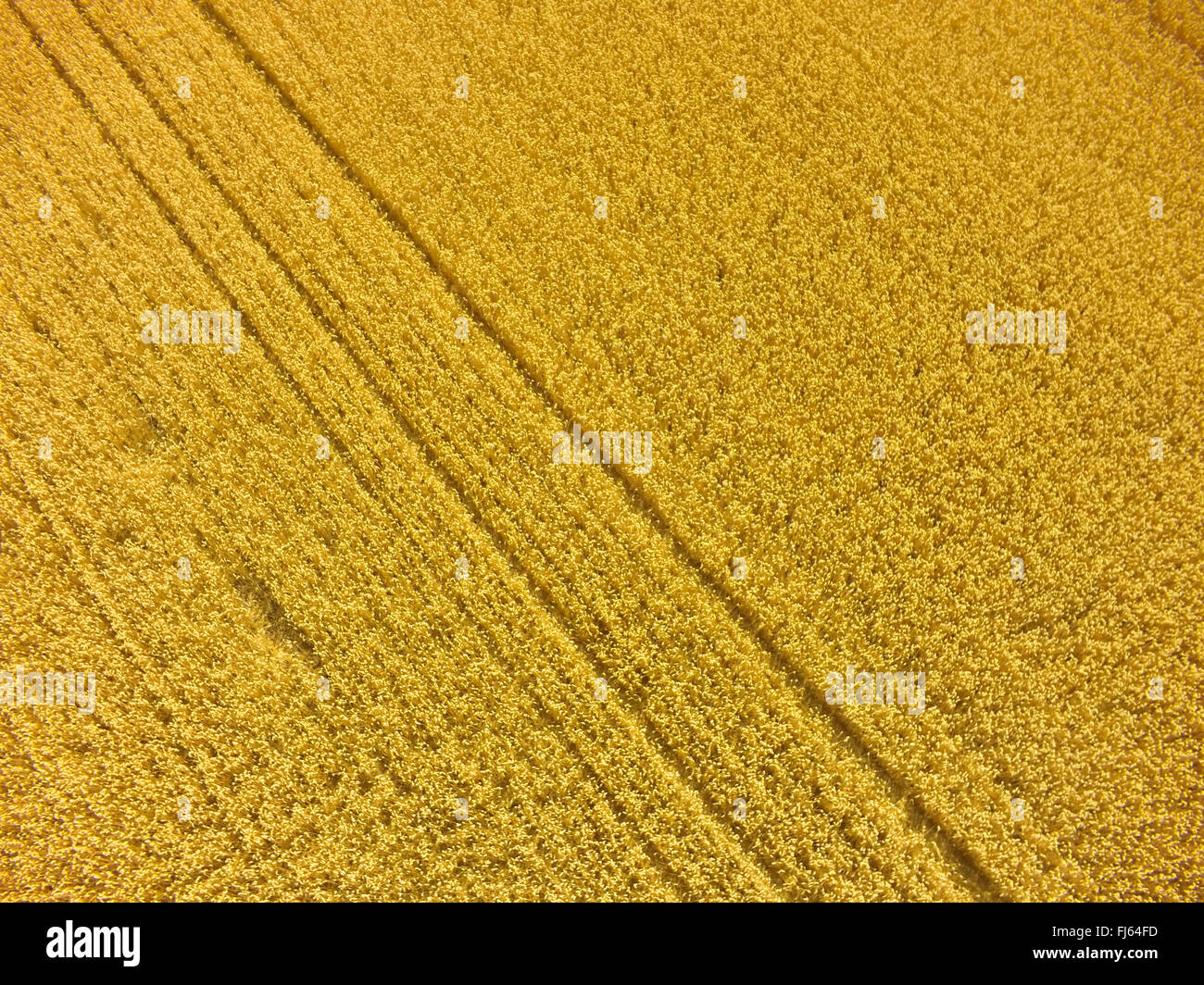 mature wheat field, air photo, 23.07.2015, aerial view , Germany, Baden-Wuerttemberg, Odenwald - Stock Image
