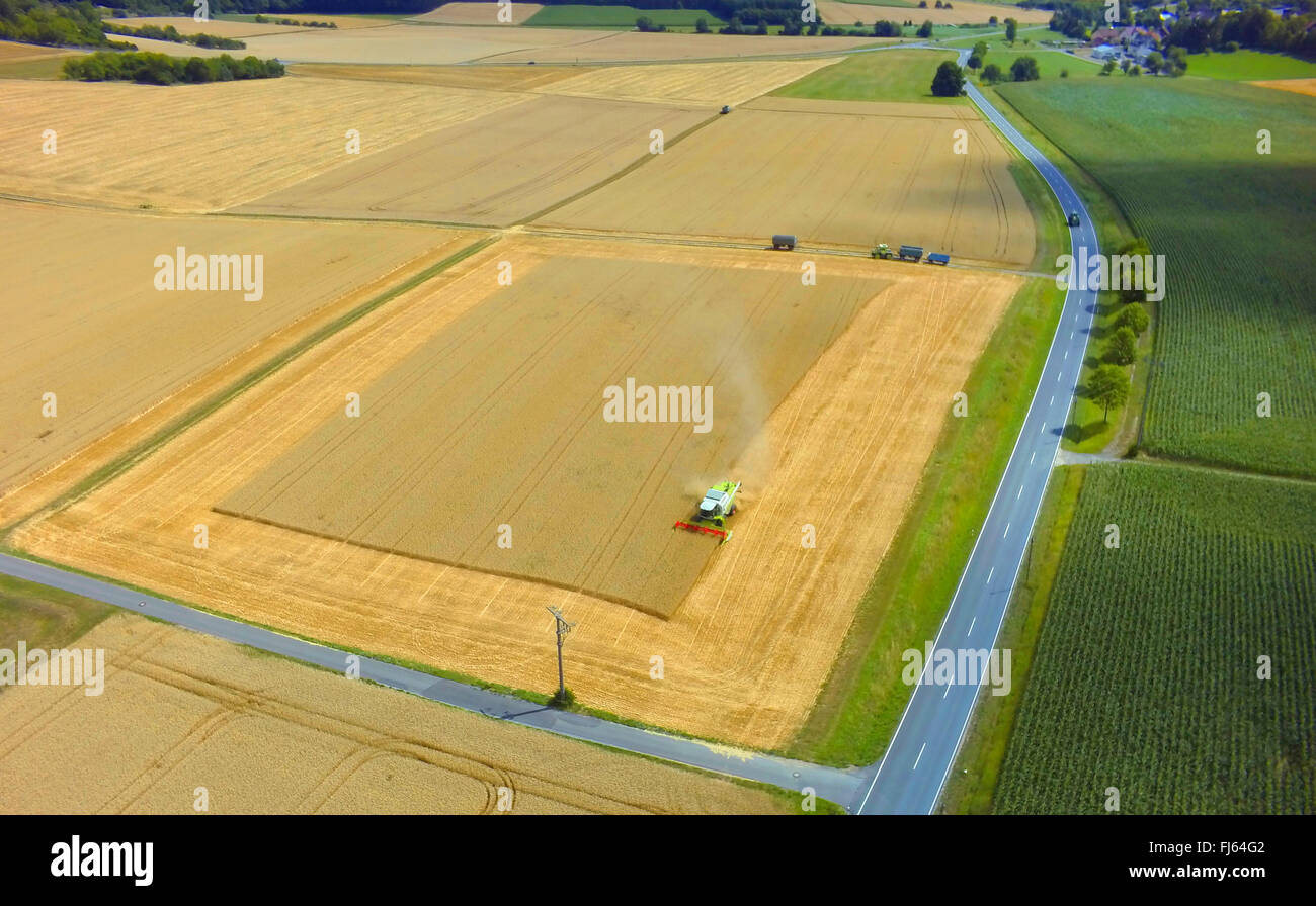 mowing-machine harvesting a wheat field, 23.07.2015, aerial view , Germany, Baden-Wuerttemberg, Odenwald - Stock Image