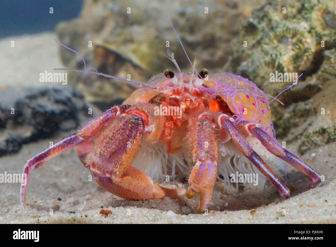 Crab Stock Photos & Crab Stock Images - Alamy