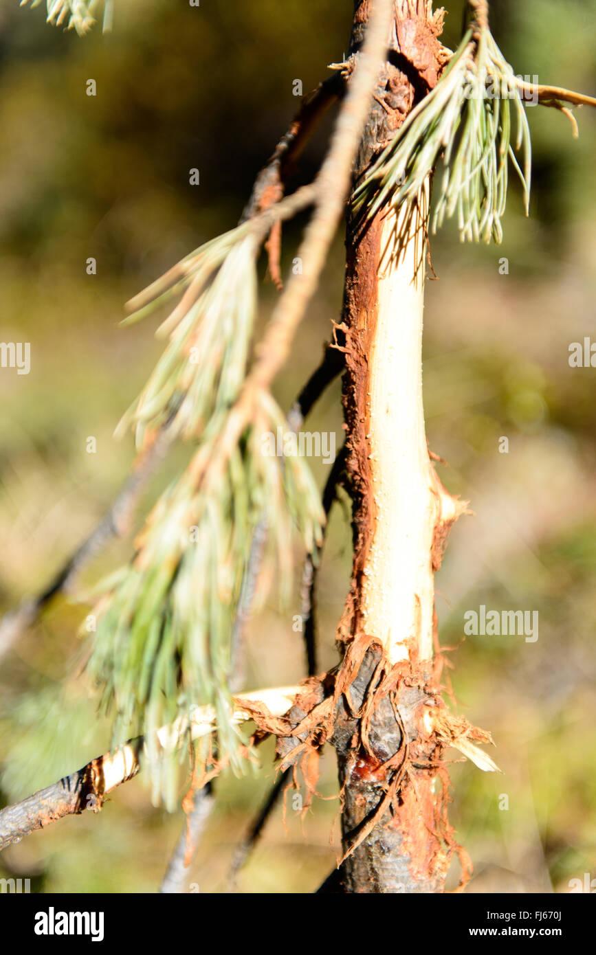 Wildschaden / wild harm - Stock Image