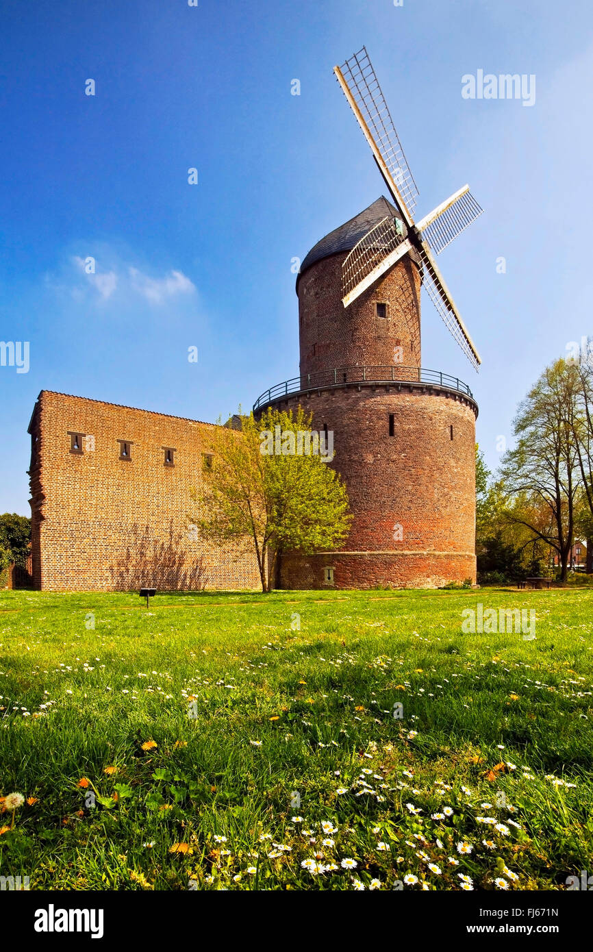 tower windmill Kempen Hessenmuehle with city wall, Germany, North Rhine-Westphalia, Lower Rhine, Kempen - Stock Image