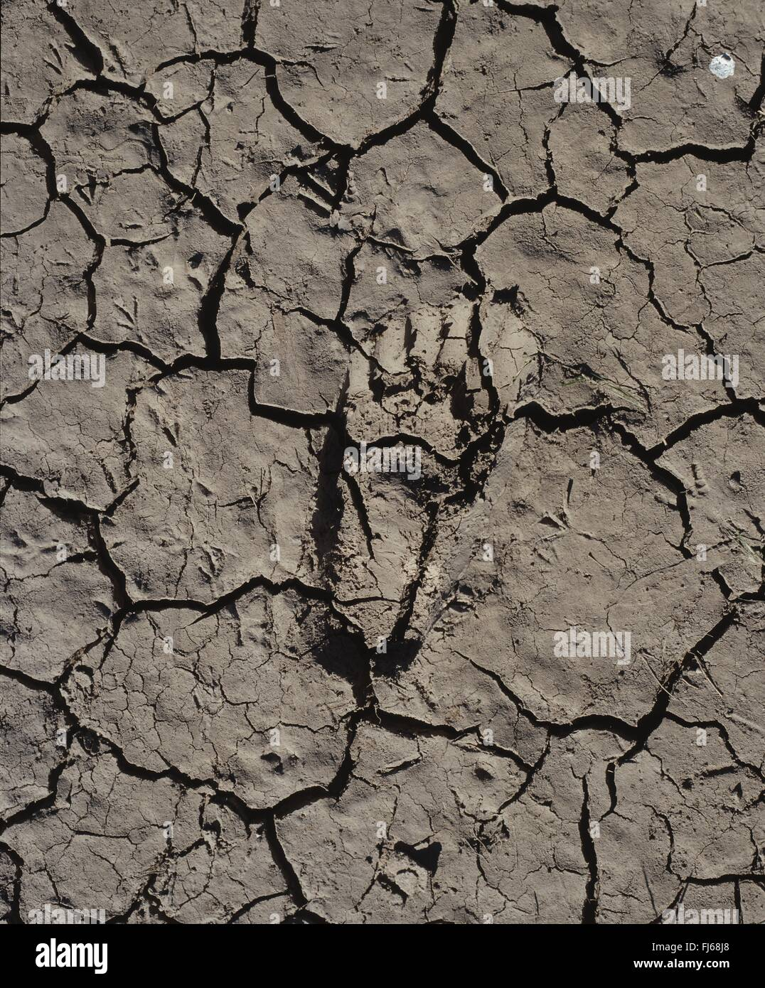 human foot print in dried riverbed, Australia, Outback, Bourke - Stock Image