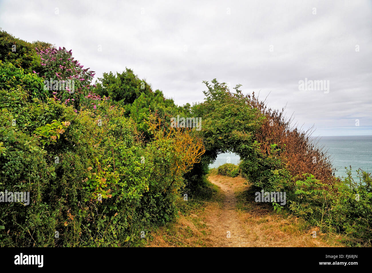 passage through shrubs at coastal walking trail GR34 at the Breton coast, France, Brittany, D�partement C�tes-d�Armor, - Stock Image