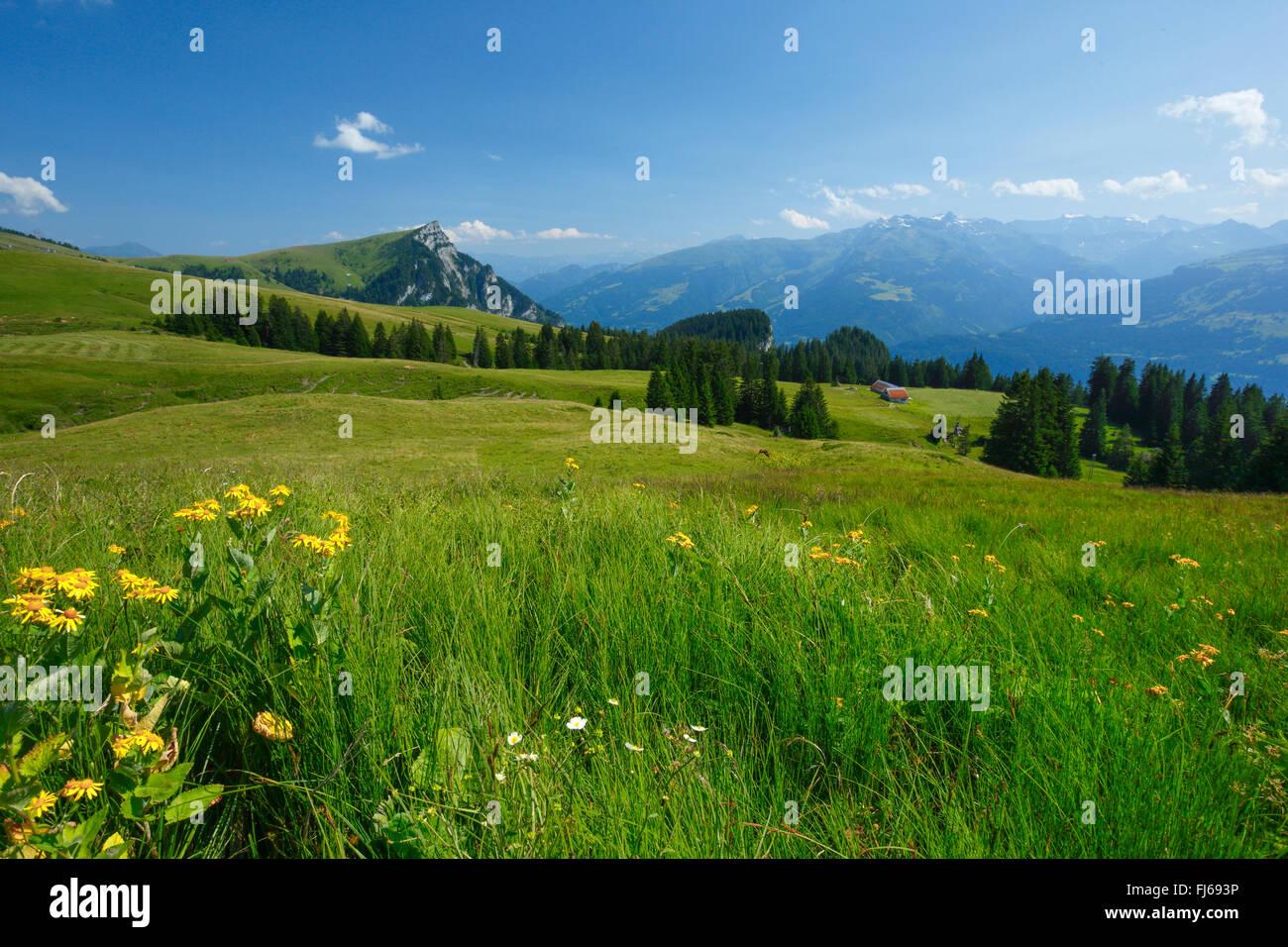 Alp Palfries with Tschuggen, Switzerland, St. Gallen - Stock Image