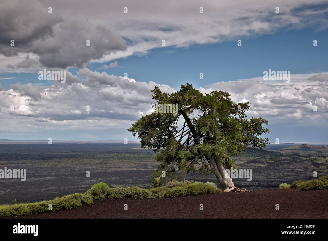 ID00474-00...IDAHO - Lone tree at the summit of Inferno Cone in Craters of the Moon National Monument and Preserve. - Stock Image