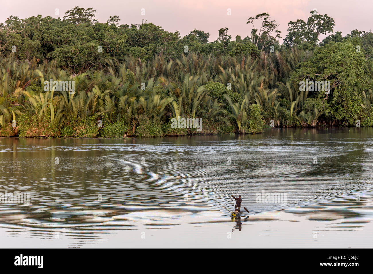 Local Man paddling on canoe Sepik River, Papua New Guinea - Stock Image