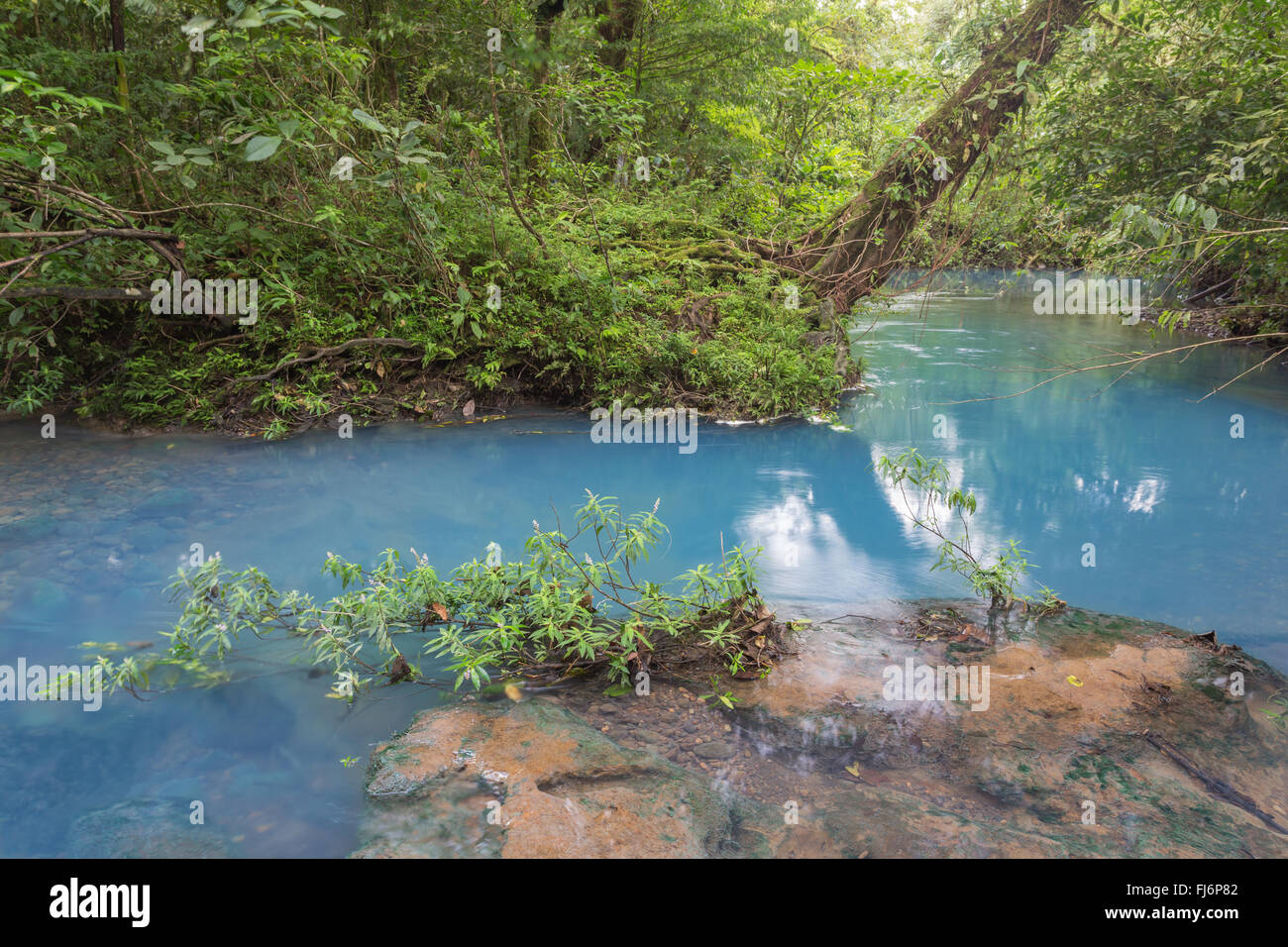 Scenery Celeste river in Tenorio National park - Costa rica - Stock Image