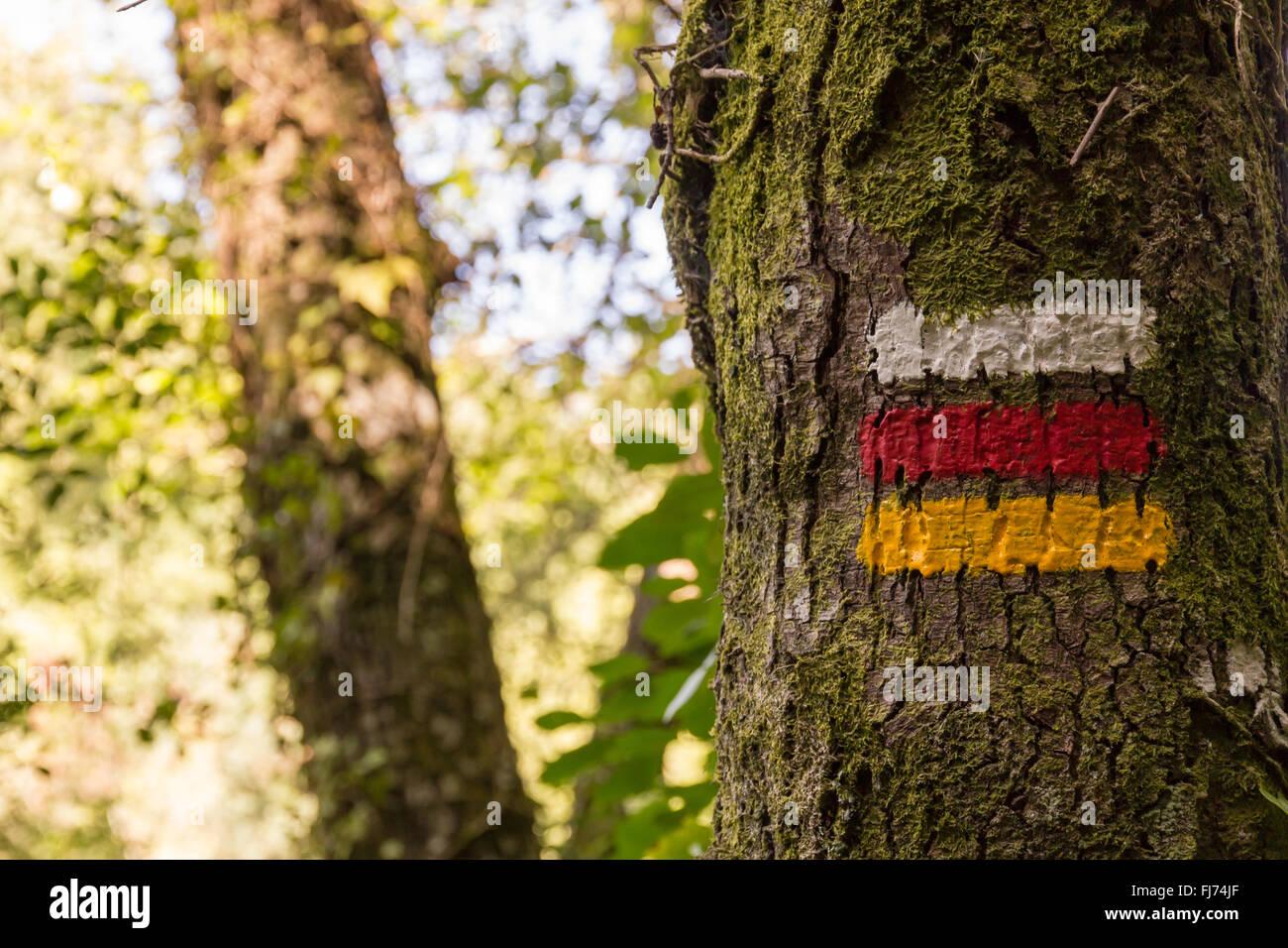 hiking marks on tree marking correct direction - Stock Image