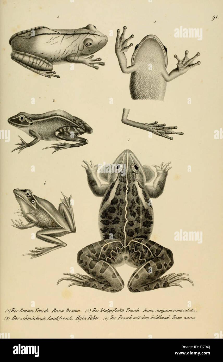 Naturgeschichte und Abbildungen der Reptilien - Stock Image