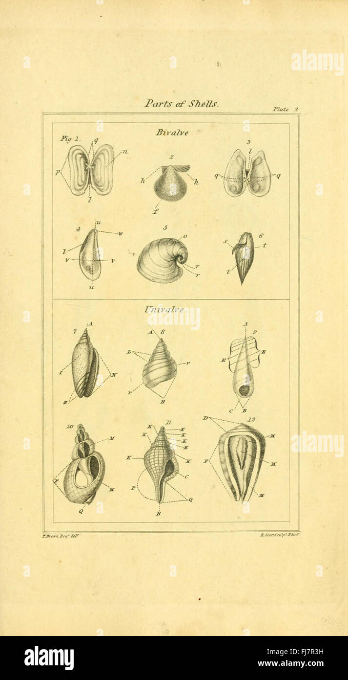 The elements of conchology; or Natural history of shells Stock Photo