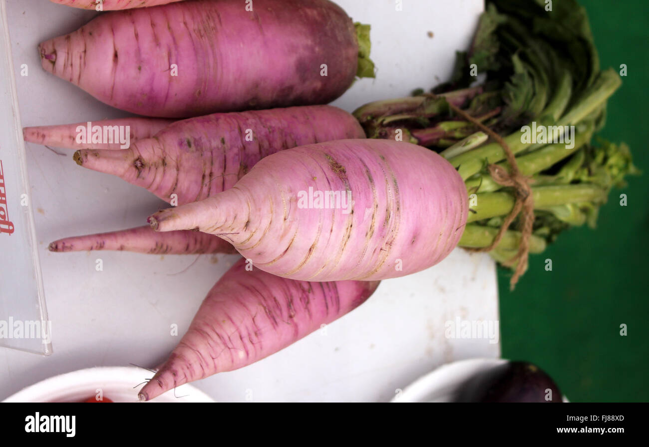 PUSA Jamuni Radish, Raphanus sativus, purple fleshed radish variety, rich in nutrients, anthocyanins and ascorbic - Stock Image