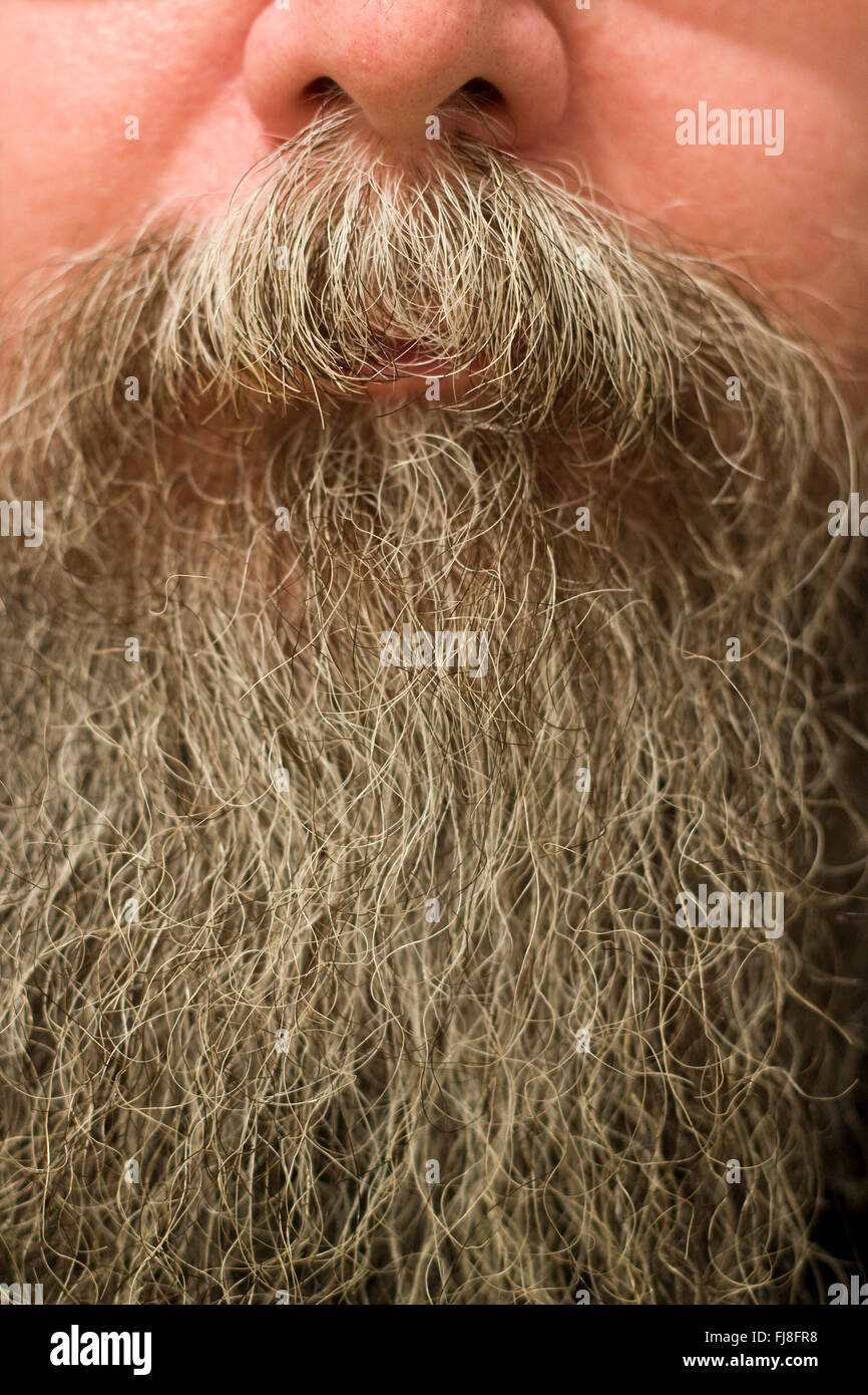 A man's nose under which is a full moustache or mustache and very long gray beard - Stock Image