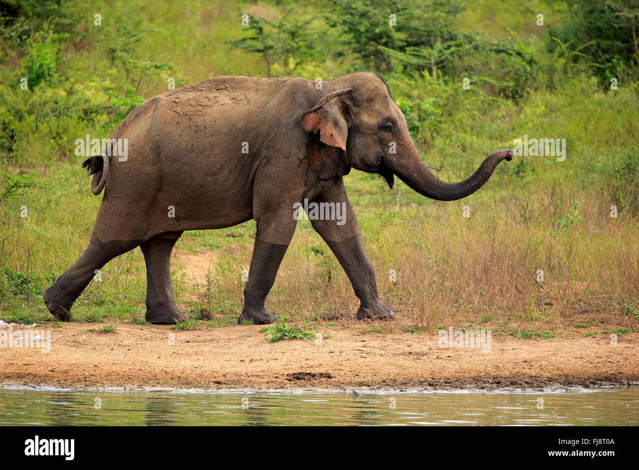 Adult Guide Sri Lanka