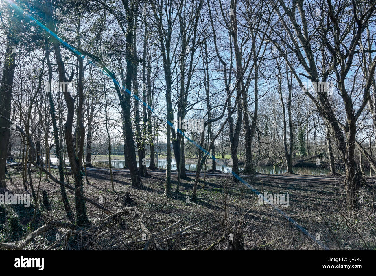 Sun flare through the trees, looking towards the weir bridge, Bute Park, Cardiff. - Stock Image