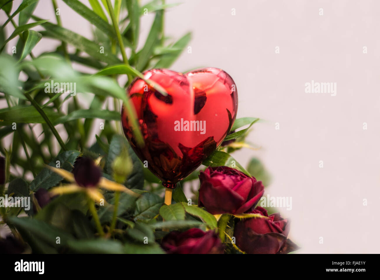 floral rose with heart decorating - Stock Image
