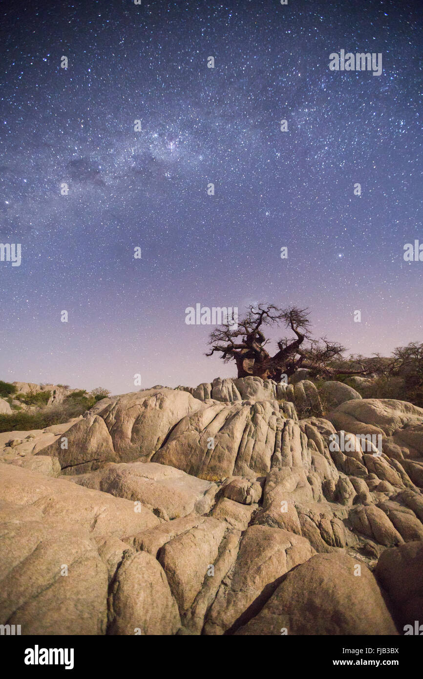 Milkyway over a baobab - Stock Image