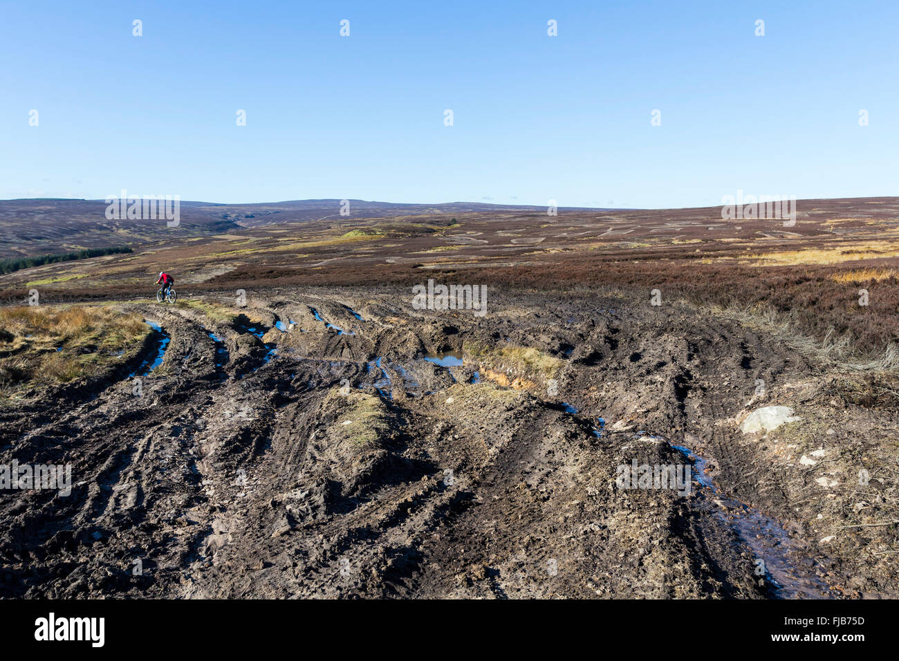 Damage and Erosion Caused by 4x4 Offroad Vehicles and Weather Doctors Gate Green Lane Hamsterley Forest Weardale - Stock Image
