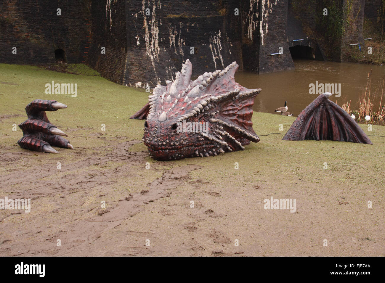 Caerphilly Castle, South Wales, UK. 1st March, 2016. Enormous Dragon placed on the grounds of Caerphilly Castle, - Stock Image