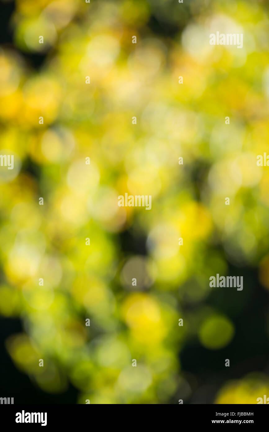 Blurred greenery - Stock Image