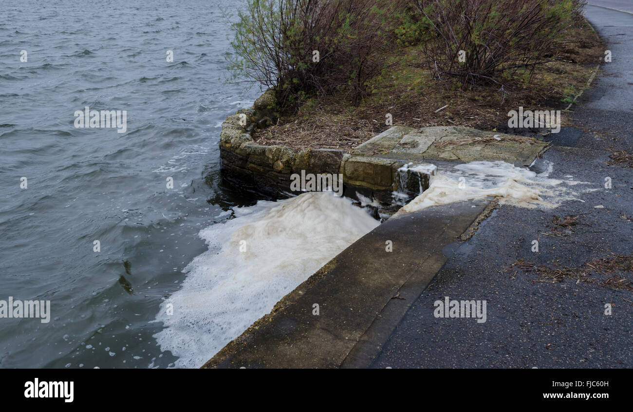 Water pollution - Stock Image