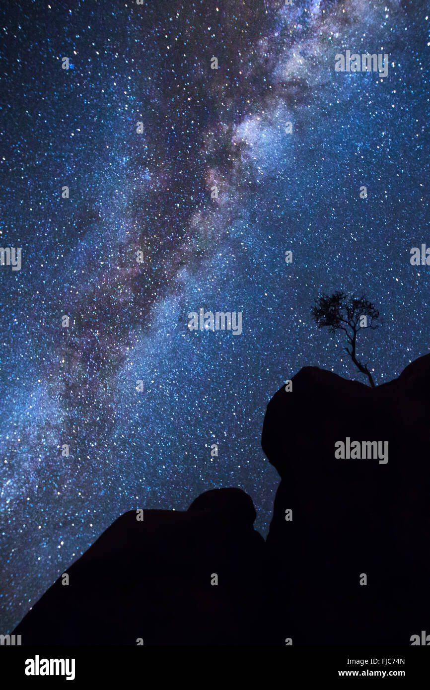 Tree silhouette under the Milky Way - Stock Image