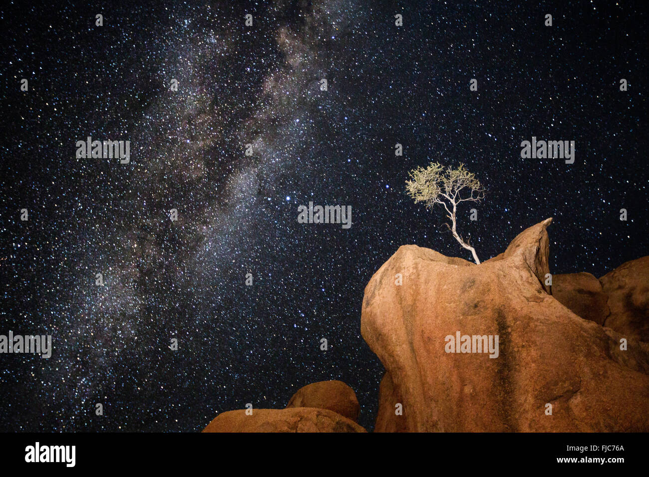 A tree under the Milky Way - Stock Image