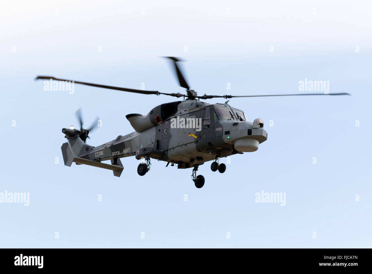 Royal Navy (Black Cats Display Team) Agusta Westland AW-159 Wildcat HMA2 performing some flights around the Maltese - Stock Image