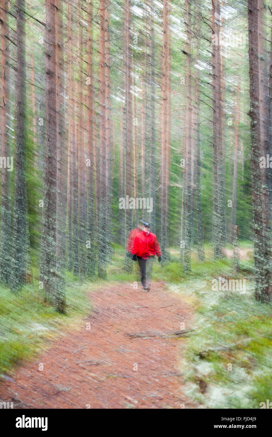 Blurred walk in the forest. Sweden Stock Photo