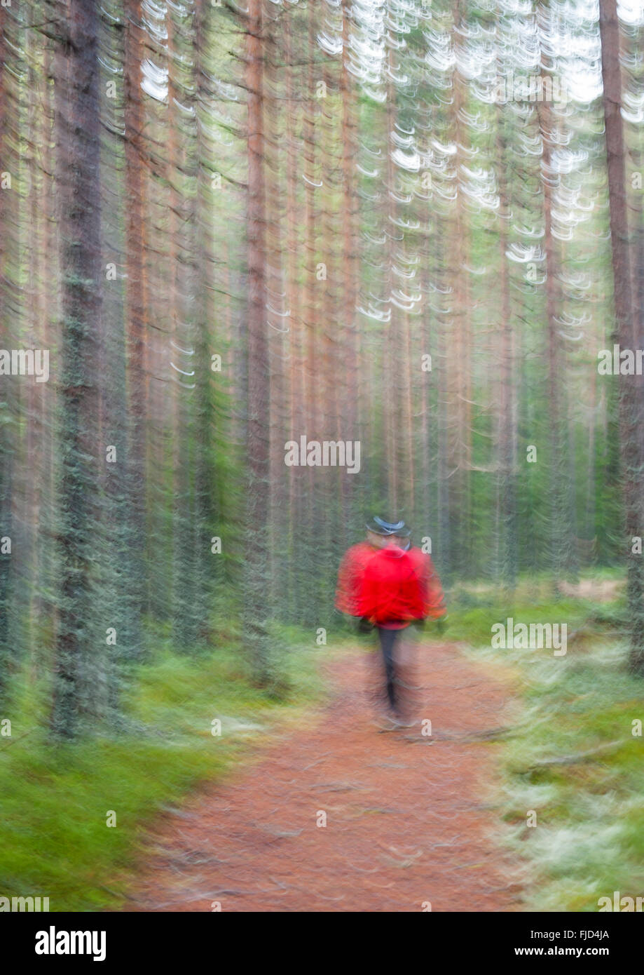 Blurred walk in the forest. Sweden - Stock Image