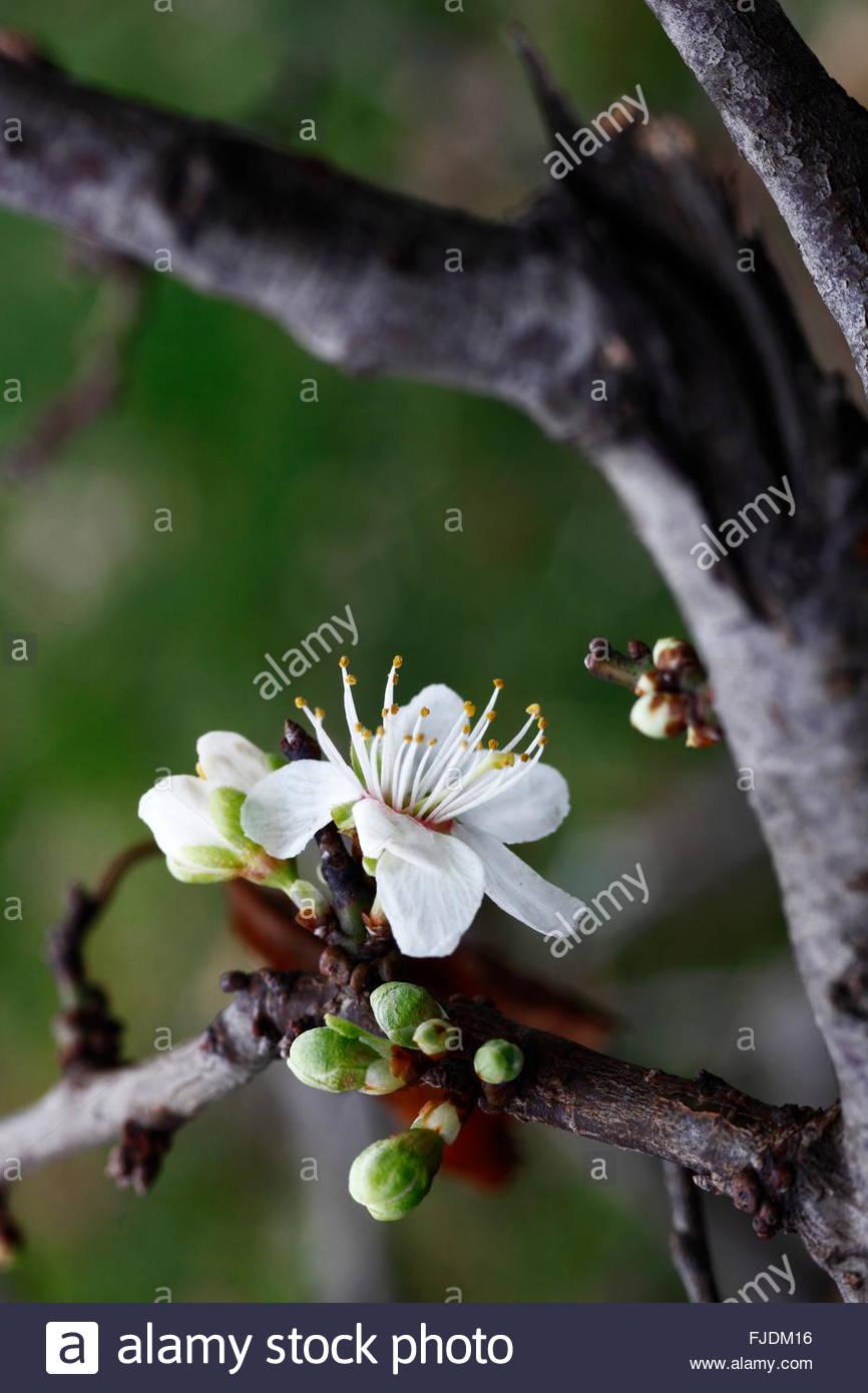 spring branch of the awakening of nature - Stock Image