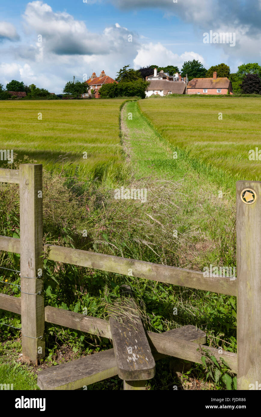 Right of way across a field in the village of Witchampton, East Dorset, England - Stock Image