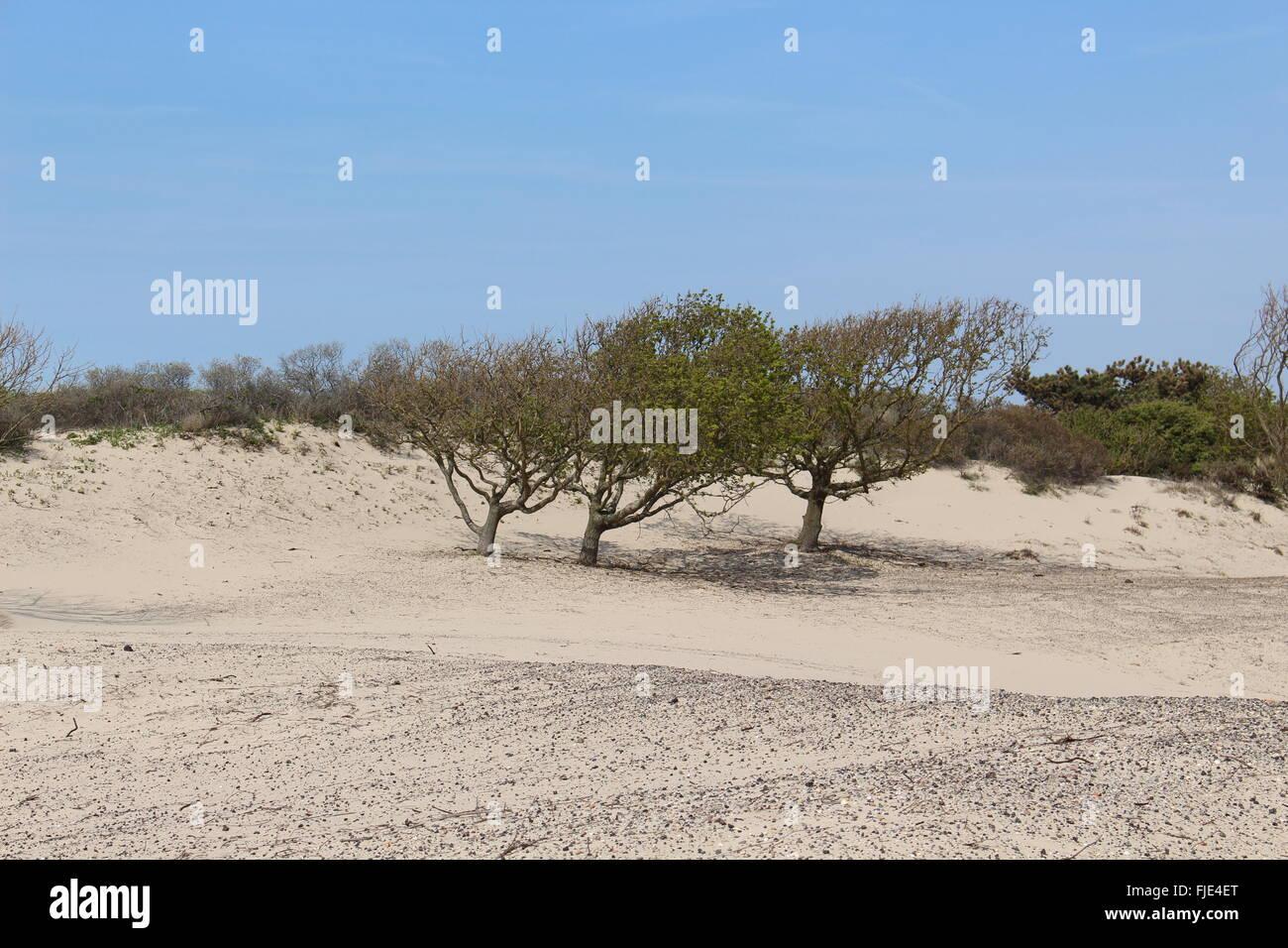 Sand Trees - Stock Image