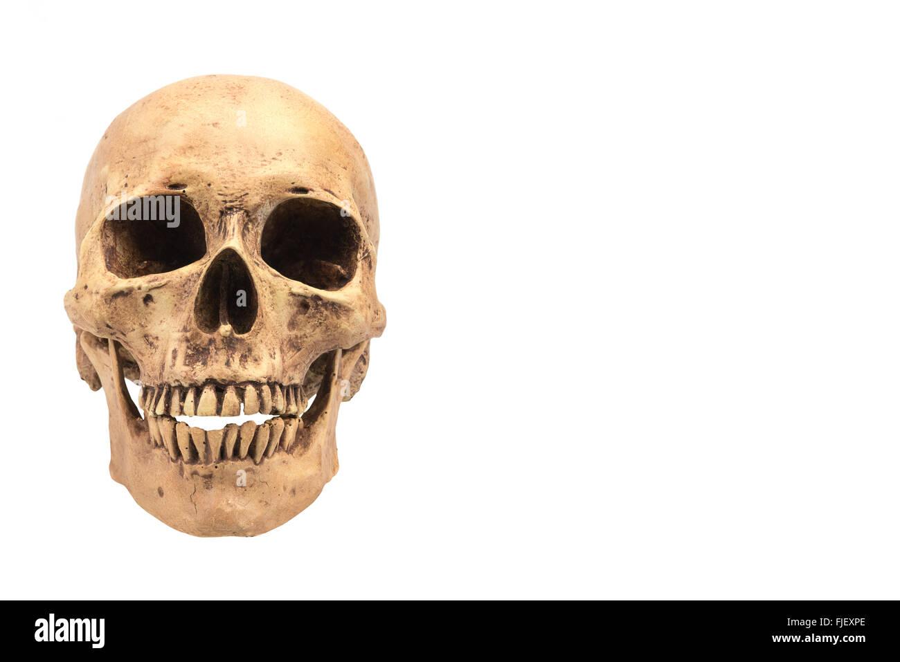 Human skull on isolated white background - Stock Image